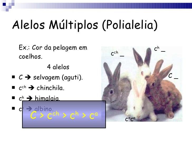 Alelos Múltiplos (Polialelia) <ul><li>Ex.: Cor da pelagem em coelhos. </li></ul><ul><li>4 alelos </li></ul><ul><li>C    s...