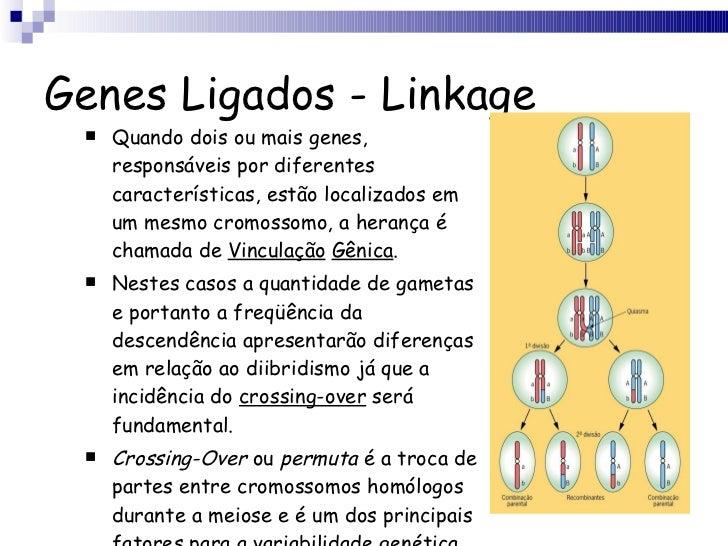 Genes Ligados - Linkage <ul><li>Quando dois ou mais genes, responsáveis por diferentes características, estão localizados ...