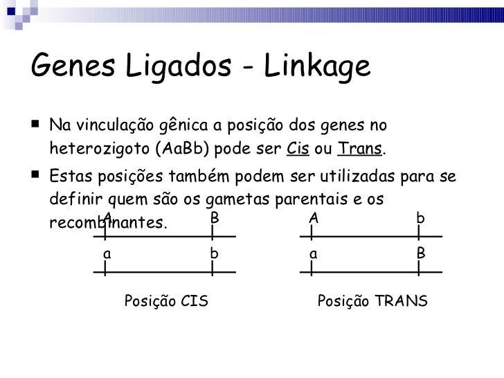 Genes Ligados - Linkage <ul><li>Na vinculação gênica a posição dos genes no heterozigoto (AaBb) pode ser  Cis  ou  Trans ....