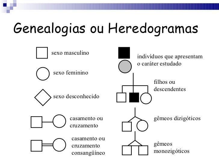 O que é estudado na genética