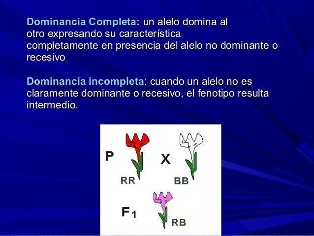 Dominancia Completa:Dominancia Completa: un alelo domina alun alelo domina al otro expresando su característicaotro expres...