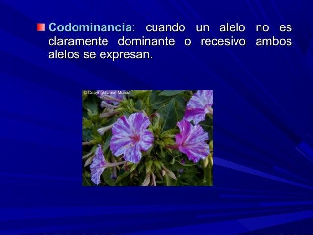CodominanciaCodominancia:: cuando un alelo no escuando un alelo no es claramente dominante o recesivo ambosclaramente domi...