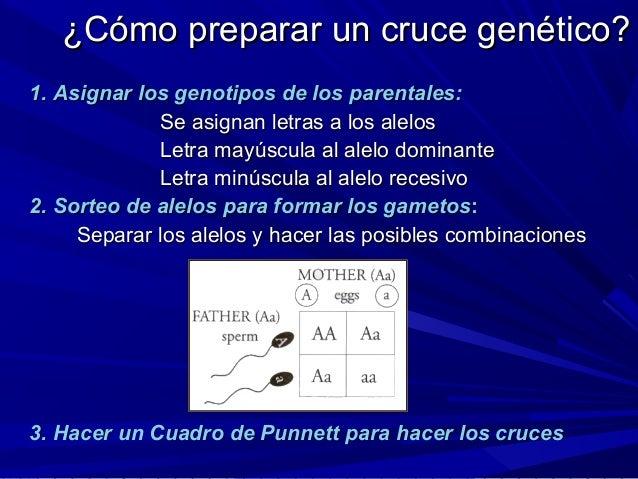 ¿Cómo preparar un cruce genético?¿Cómo preparar un cruce genético? 1.1. Asignar los genotipos de los parentales:Asignar lo...