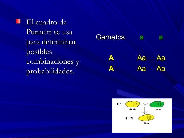 El cuadro deEl cuadro de Punnett se usaPunnett se usa para determinarpara determinar posiblesposibles combinaciones ycombi...
