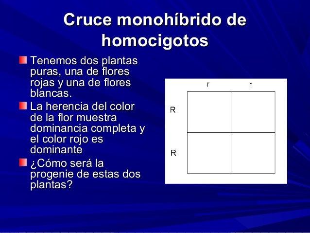 Cruce monohíbrido deCruce monohíbrido de homocigotoshomocigotos Tenemos dos plantasTenemos dos plantas puras, una de flore...