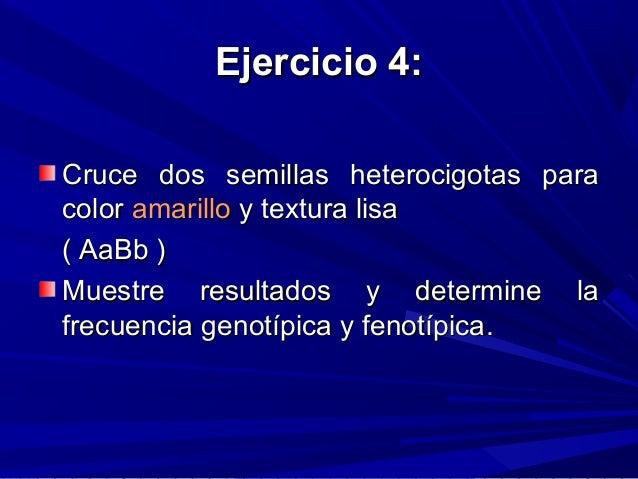 Ejercicio 4:Ejercicio 4: Cruce dos semillas heterocigotas paraCruce dos semillas heterocigotas para colorcolor amarilloama...