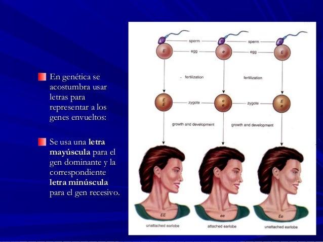 En genética seEn genética se acostumbra usaracostumbra usar letras paraletras para representar a losrepresentar a los gene...