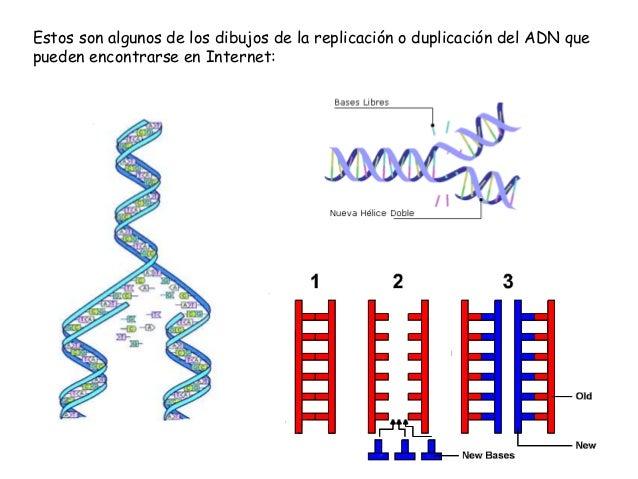 Worksheet. Genetica