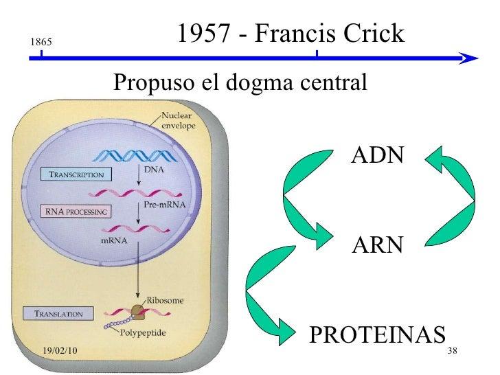 Genetica Adn Y Arn