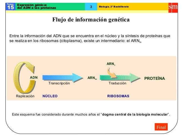Biología. 2º BachilleratoTema:15Expresión génica:del ADN a las proteínasFlujo de información genéticaADN ARNmTranscripción...