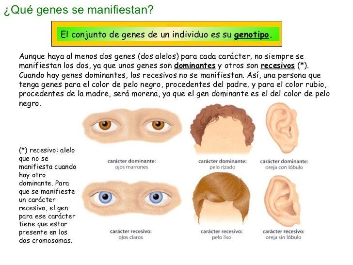 GENES DOMINANTES Y RECESIVOS DOWNLOAD