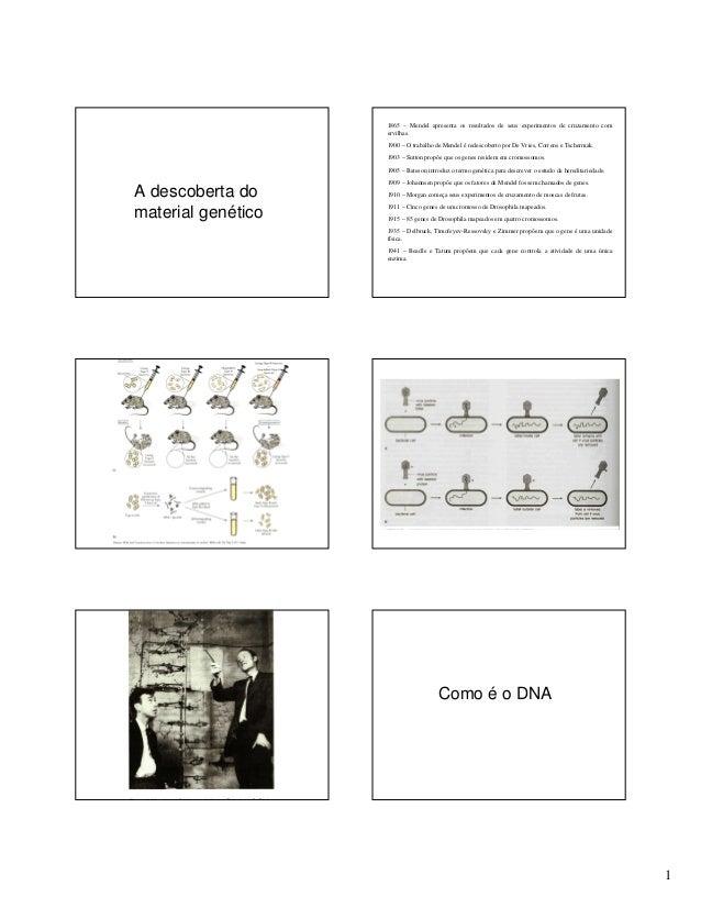 1 A descoberta do material genético 1865 – Mendel apresenta os resultados de seus experimentos de cruzamento com ervilhas....
