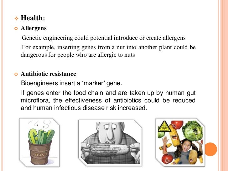 Genetically Modified Food Pose A Risk To Human Health