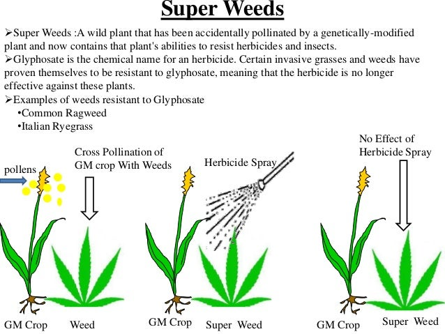 genetically modified crop plants The benefits and risks of any particular gm crop depend on the  of plant  introductions by comparing the introduction of gm crops to past.