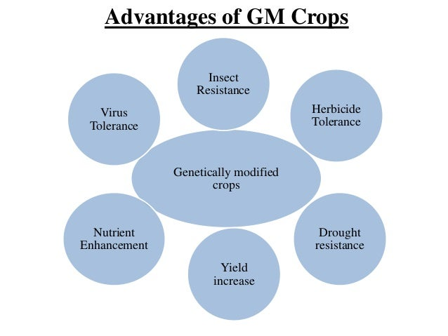 genetically modified crops and food security scientific facts genetically