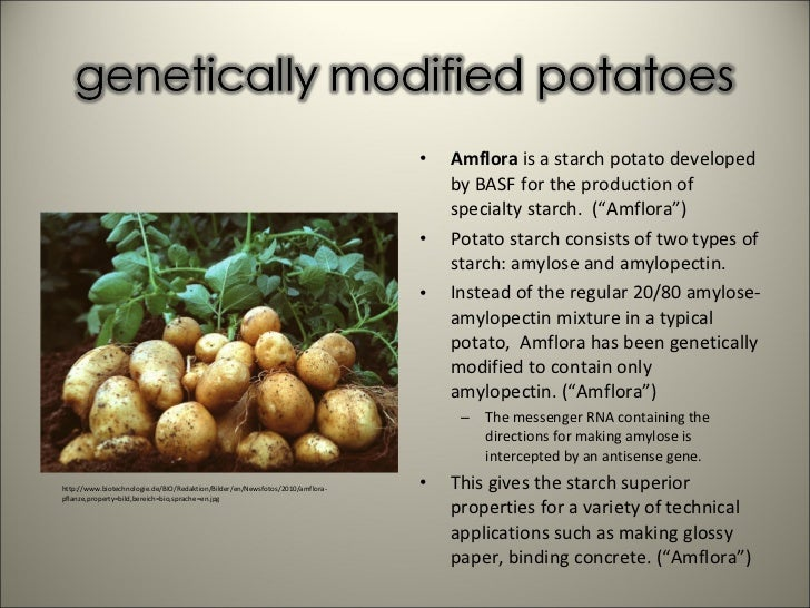 how to tell if potatoes are gmo