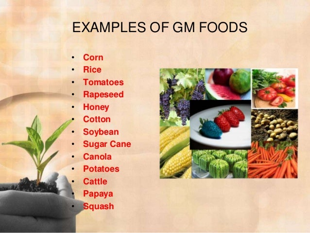 gmf genetically modified food Genetically modified foods (gmo foods) have been shown to cause harm to humans, animals, and the environment, and despite growing opposition, more and more foods continue to be genetically altered.