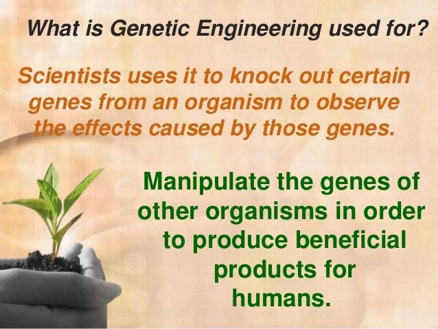 "genetically engeneering food essay Potential health effects of genetically modified foods lessons/genetically-modified-food commentary essay"" from laeporg and ""6+1 traits of writing."