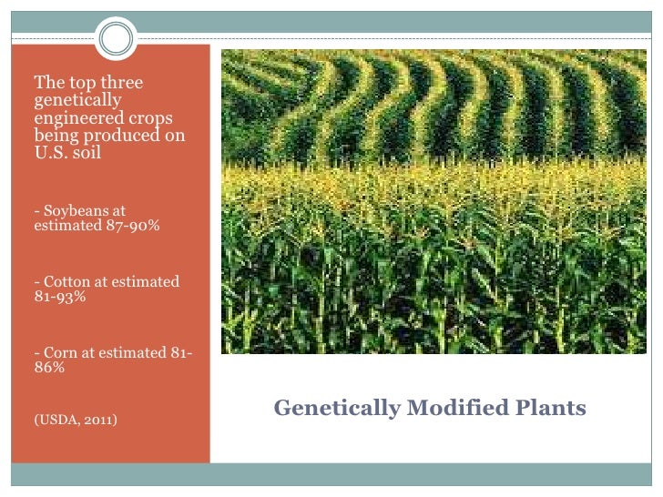 genetically modified foods and its impact on One important environmental impact of genetically modified (gm) foods is the threat to biodiversity resulting from the genetic transfer from gm crops to native plant species.