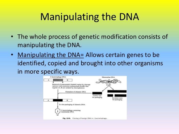 Genetically modified plants process - photo#55