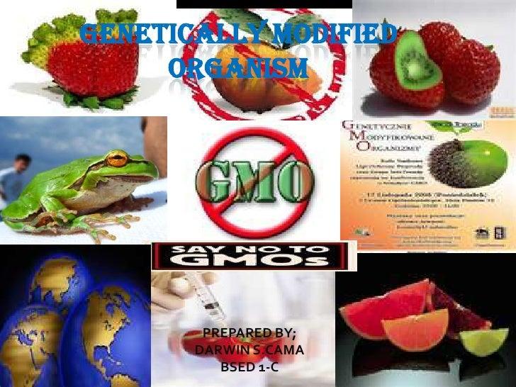 GENETICALLY MODIFIED ORGANISM<br />PREPARED BY;<br />DARWIN S.CAMA<br />BSED 1-C<br />