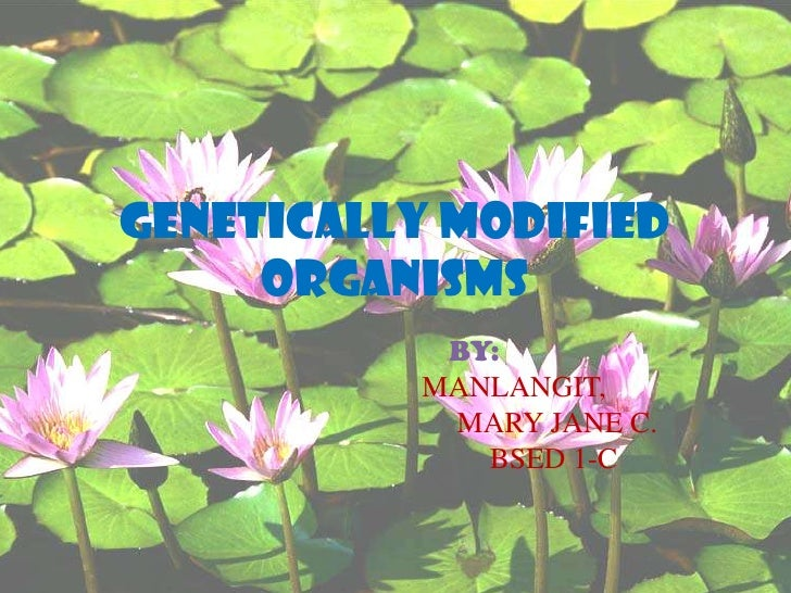 GENETICALLY MODIFIED ORGANISMS<br />BY:<br />MANLANGIT,<br />				 MARY JANE C.<br />				BSED 1-C<br />