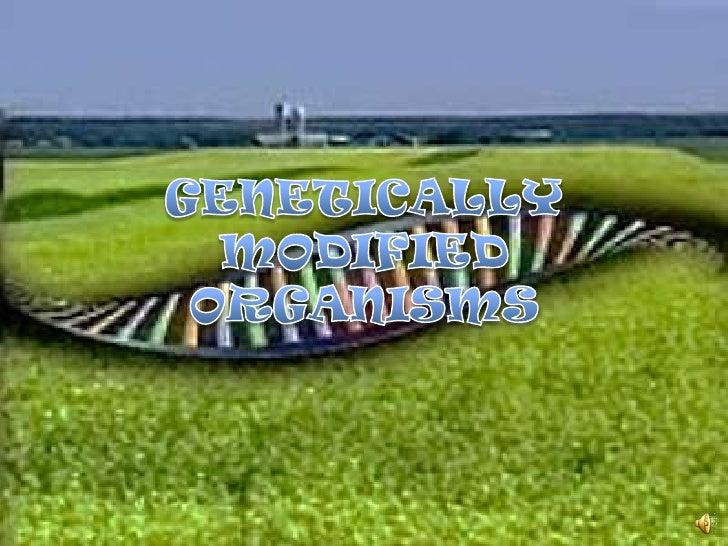 GENETICALLY MODIFIED ORGANISMS<br />