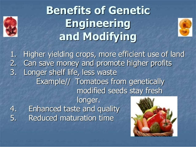 a discussion of the benefits of genetically modified organisms While genetically modified organisms (gmos) and the pesticides that go along with them are touted as the solution to feed the world, the reality is a far cry from this industry-spread ideal.