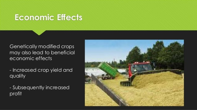 gm crops benefits and effects A 2014 review, concluded that gm crops' effects on farming were positive there are economic and environmental benefits of gm cotton to farmers in india.