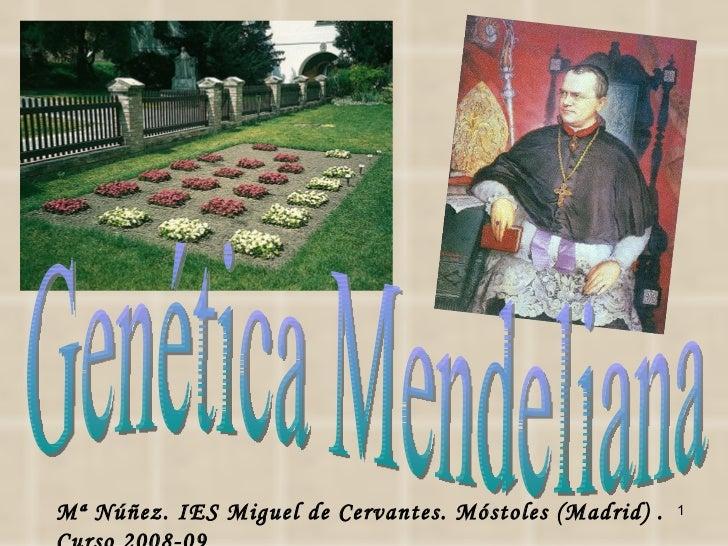 Genética Mendeliana Mª Núñez. IES Miguel de Cervantes. Móstoles (Madrid) . Curso 2008-09