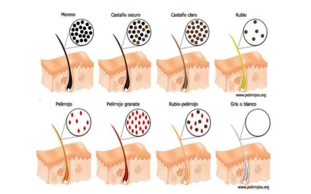 La mancha de pigmento sobre la persona la profiláctica