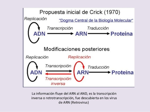 Genetica Molecular2017