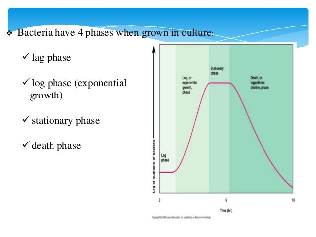 four phases of the bacterial growth curve