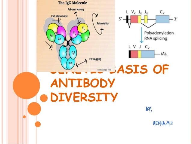 GENETIC BASIS OF ANTIBODY DIVERSITY BY, REKHA.M.S
