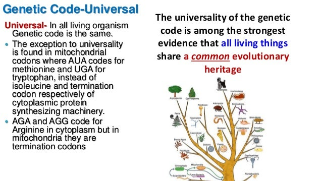 living organisms share a universal genetic Living things living things grow and developliving things are based on a universal genetic code  respond to their all living organisms from small to big share.