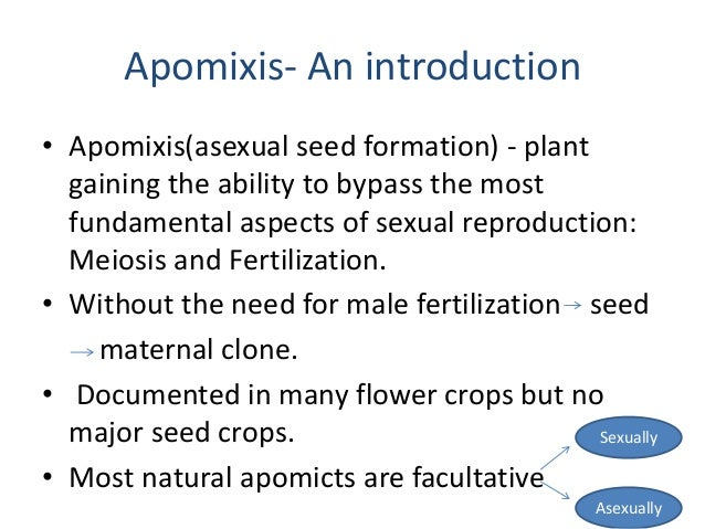 Apomixis asexual reproduction examples