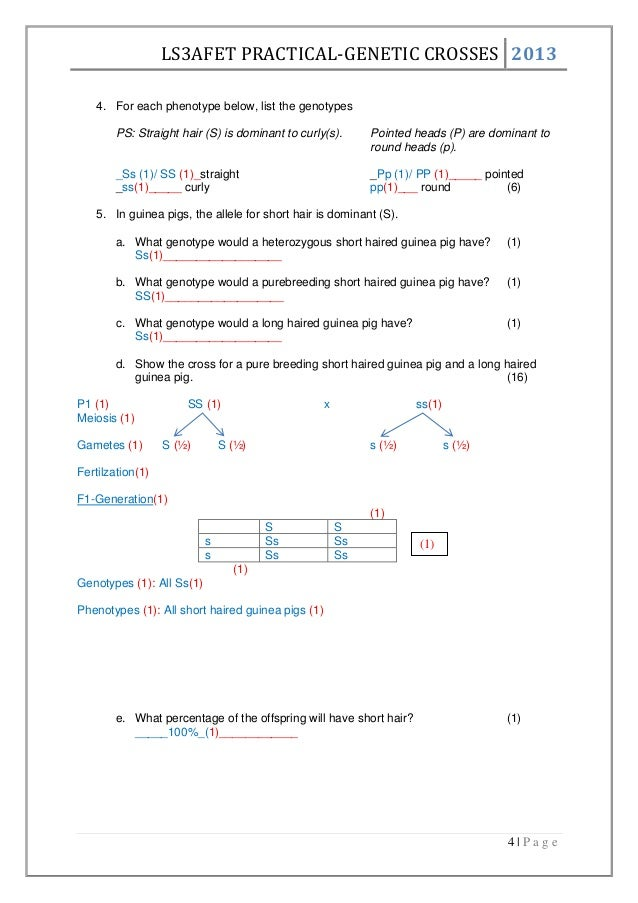 Genetic crosses worksheet – Genetic Crosses Worksheet