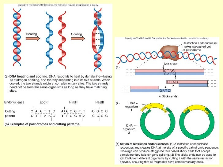 an analysis of genetic engineering Start studying chapter 10 - genetic engineering learn vocabulary, terms, and more with flashcards,  analysis of dna fragments in gel electrophoresis involves.