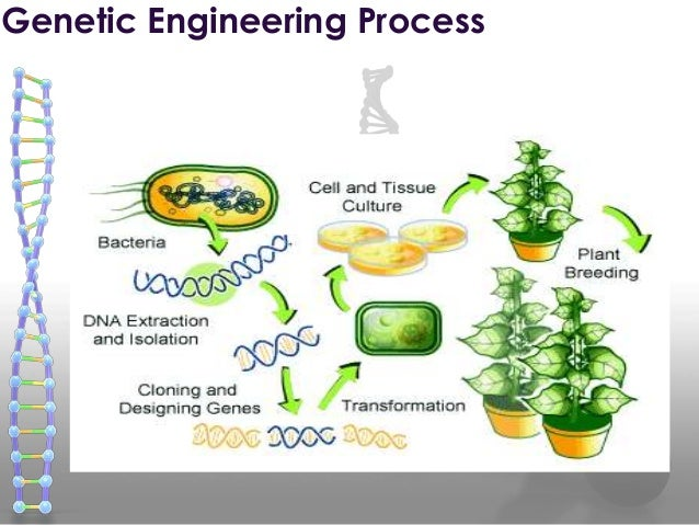 an introduction of the current applications in genetic engineering Genetic engineering is a very broad discipline that is best broken down into its areas of practical application in order to be most easily understood the following sections provide a brief introduction to gm plants, gm animals, gm micro-organisms, genetic testing, pharmacogenetics and gene therapy.