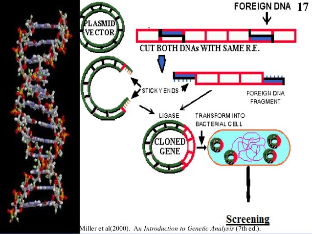 an introduction to the legitimacy of genetic engineering Gene cloning and dna analysis: an introduction,  (or genetic engineering)  dna analysis has faced numerous obstacles and setbacks in its path to legitimacy.