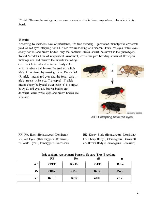 genetic experiment on the offspring of drosophila melanogaster 4