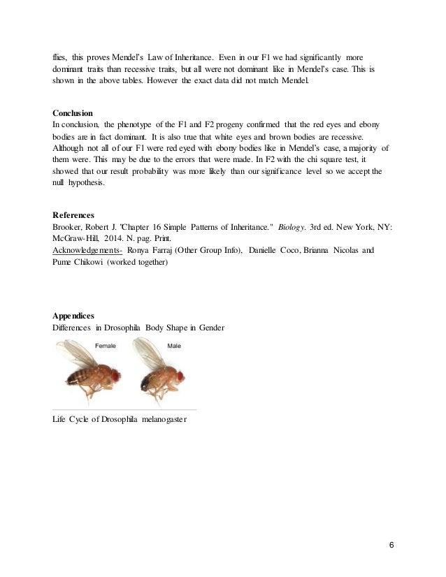 genetic experiment on the offspring of drosophila melanogaster 7