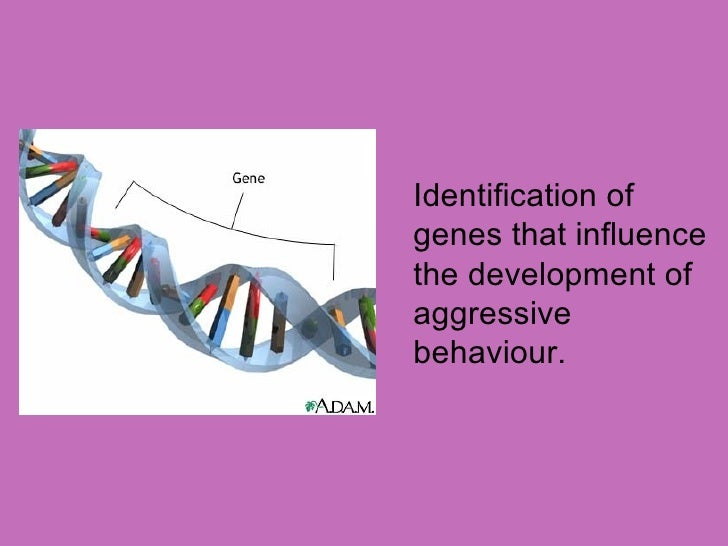 discuss genetic explanations of aggression 4 8 Outline and evaluate genetic factors in aggression: a  amygdala is responsible  for attaching emotional significance to sensory information.