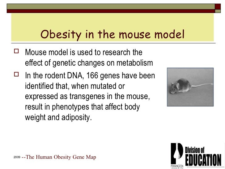 How human influence heredity in mice