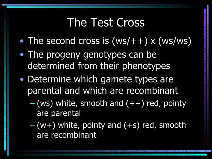 The Test Cross <ul><li>The second cross is (ws/++) x (ws/ws) </li></ul><ul><li>The progeny genotypes can be determined fro...