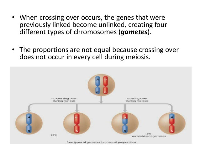 recombinant type gametes are formed because of