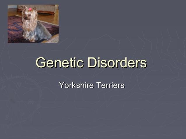 Genetic Disorders   Yorkshire Terriers