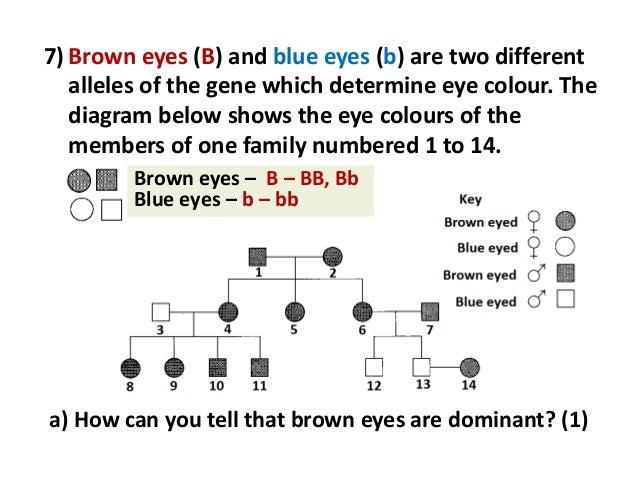Eye Gene Chart Hobitfullring