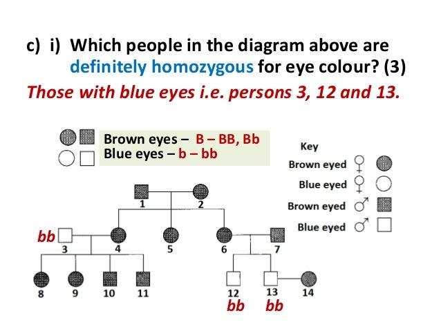 Eye Color Inheritance Diagram Circuit Diagram Symbols