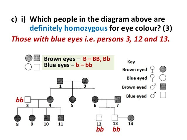 Genetics 54 ccuart Choice Image